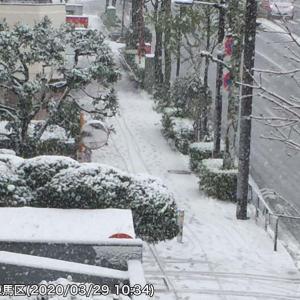 「桜咲く時期外れの雪」 東京23区も道路に積雪 ノーマルタイヤの走行はNG!