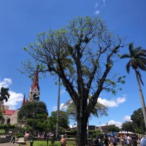 街中に銅像がゴロゴロ♫♫お洒落で綺麗なコスタリカの首都・サンホセをお散歩♡♡