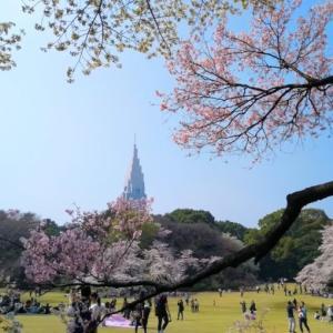 2020年最新-お花見ついでに寄れる!新宿御苑近くのランチがおいしい人気店12店舗