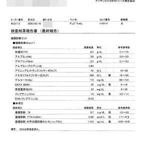 チュピの腎臓病と甲状腺機能低下症。検査結果の速報。