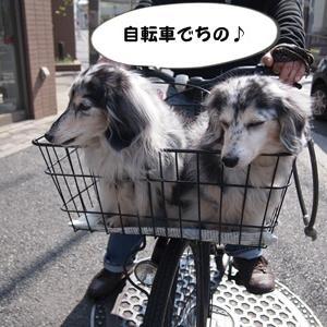 大好きなPON!PON!桜と大好きなトレジャーズちゃん☆彡