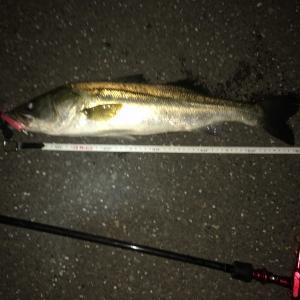 第106:週末釣行😅