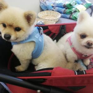 GO !保護犬GO 保護犬の会