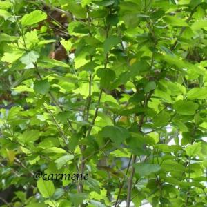 緑の季節…グッときて*スローバラード - 宮本浩次