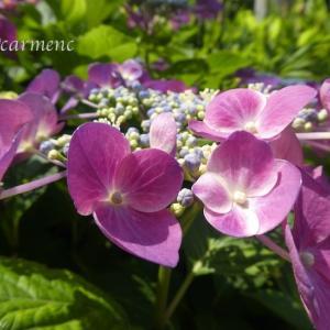 晴れた日は紫陽花… そばにいる*菅田将暉 『さよならエレジー』