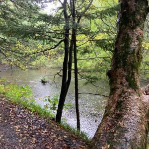 雨と山森川