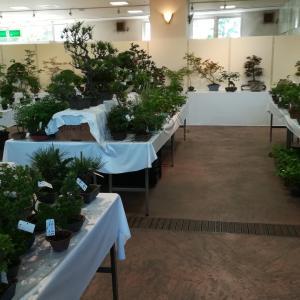 掘り出し物ミニ盆栽を探しに❗川口緑化センター