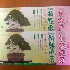 緑風展 4月19日からスタート❗ in上野グリーンクラブ
