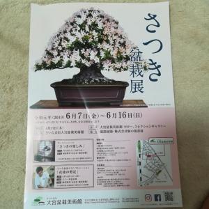 さつき盆栽展6月7日から 大宮盆栽美術館