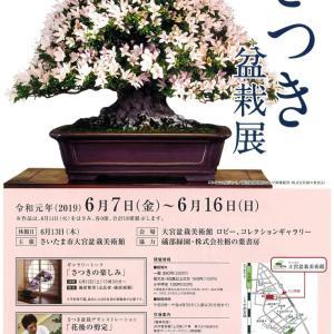 盆栽イベント情報 さつき盆栽デモンストレーション「花後の剪定」 6月16日(日)
