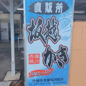 速報❗️赤穂坂越の牡蠣価格は?