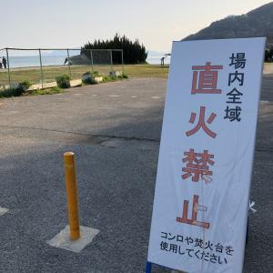 桜開花 丸山県民サンビーチ