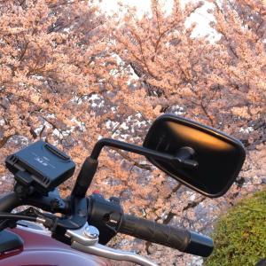 桜咲く❣️