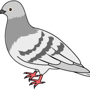 ベランダに鳩が来るので困っています!