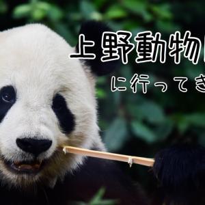 上野動物園に行ってきたっ③