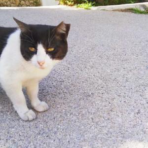 さくら猫に会えました(=^ェ^=) 沖縄のお土産