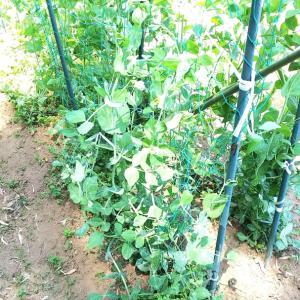 畑作業とファンデと熱中症
