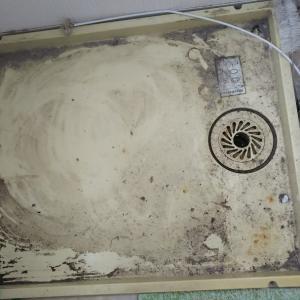 洗濯機どかしたら
