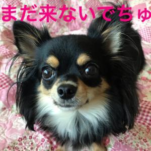 なんじゃこりゃーo(`ω´ )o