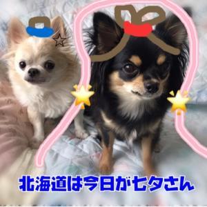 """""""""""☆七夕☆"""""""""""