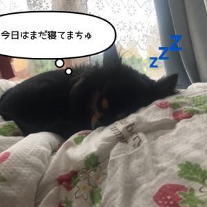 お寝坊さん