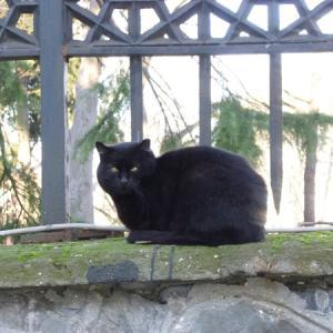 番外編:旅先で出会った猫様特集