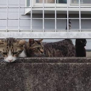 セカンドオピニオンの見解|大怪我していた野良猫(20話)