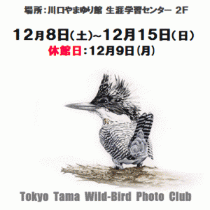 本日の有馬ダム・・・(12/3日)