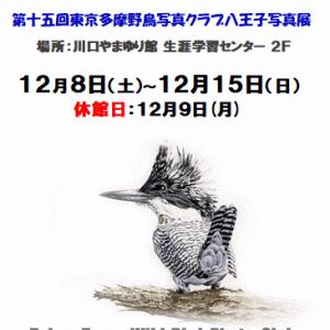 野鳥写真展開催中・・・(12/8~12/15)