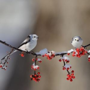 真冬の北海道・・・(道東)