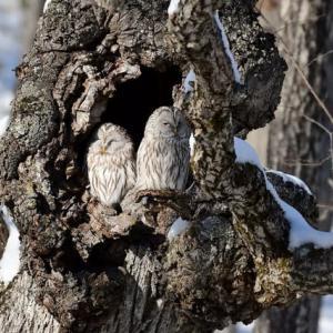 釧路湿原の野鳥達・・・(タンチョウの聖地)
