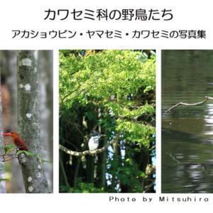 カワセミ科の野鳥たち・・・(アカショウビン・ヤマセミ・カワセミの写真集)