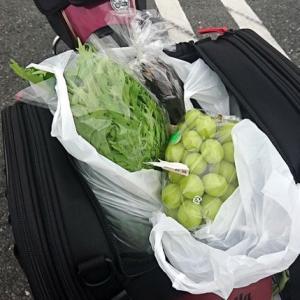 野菜買う気満々のツーリング