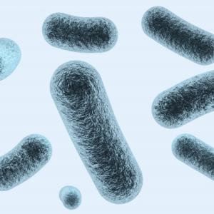 プレボテラ細菌の素朴な疑問