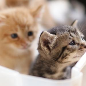 ネコからもらった抗体かも?