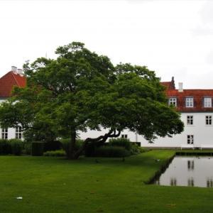 デンマークで発生した新型コロナウイルスのミンクへの感染のニュース