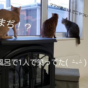 ママの企みを猫に知られる