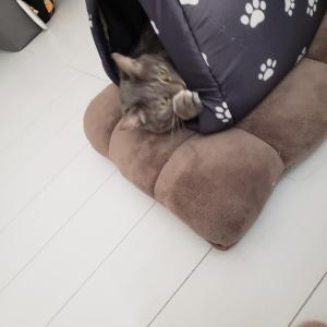 うちの猫。