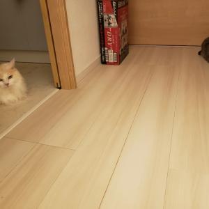 ソーシャルディスタンスを保つ猫。