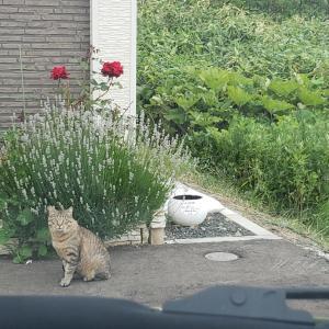 野良猫たち。