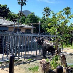 みんなの動物園が始まりましたね❤︎