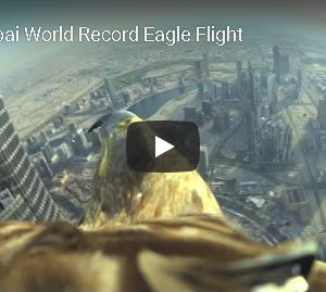 ドバイの摩天楼を鷹が舞う