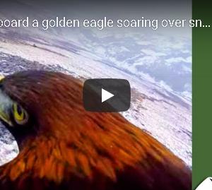 スコットランドの寒空を鷹が舞う