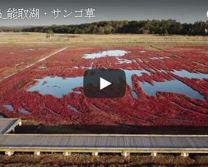 ドローン空撮 サンゴ草で赤く染まる北海道能取湖