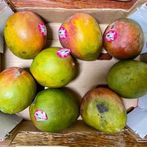 「コストコのマンゴー」