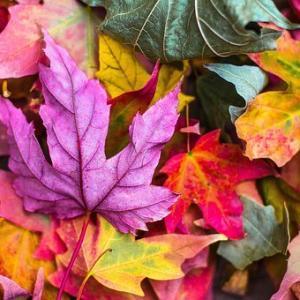 秋っぽい色の見つけ方と配色の作り方?