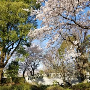 桜だけじゃなく、すっかり春が来ましたね
