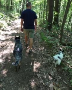 犬2匹の生活