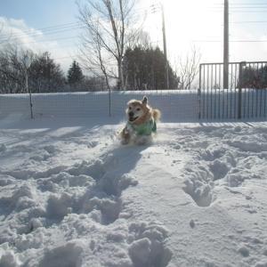 猛吹雪で…積もった積もったぁ~