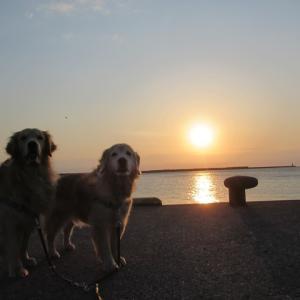 朝からヘンなヴィオ・・・と朝焼けの海へ朝散歩♪